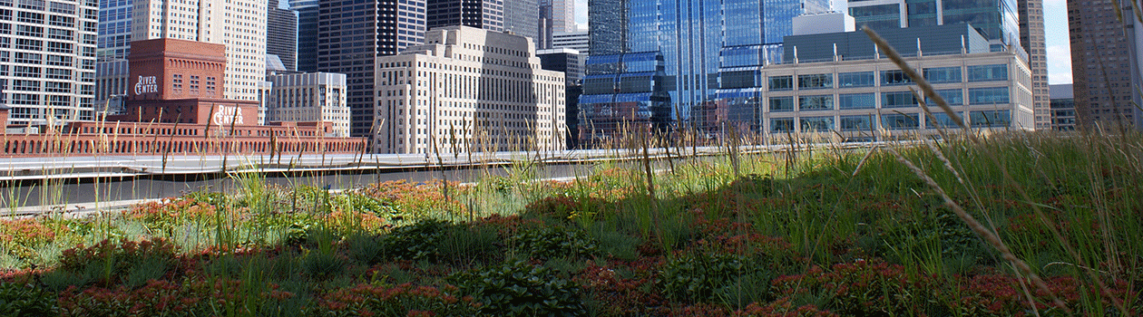 The green roof atop CTA Headquarters in the bustling West Loop